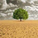 Désertification: quelle relation avec le changement climatique