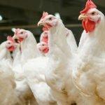 Additifs en alimentation animale, la voie de la réconciliation !