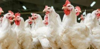Additifs en alimentation animale : La voie de la réconciliation !