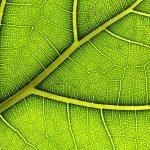 Photosynthèse synthétique : Une nouvelle technologie qui recycle le CO2 plus rapidement que les plantes