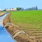 Agriculture : 2,6 milliards DH investis à Laâyoune-Sakia El-Hamra