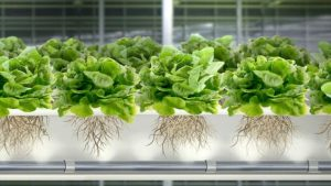 plantes-aspergees-infographie-ferme-verticale